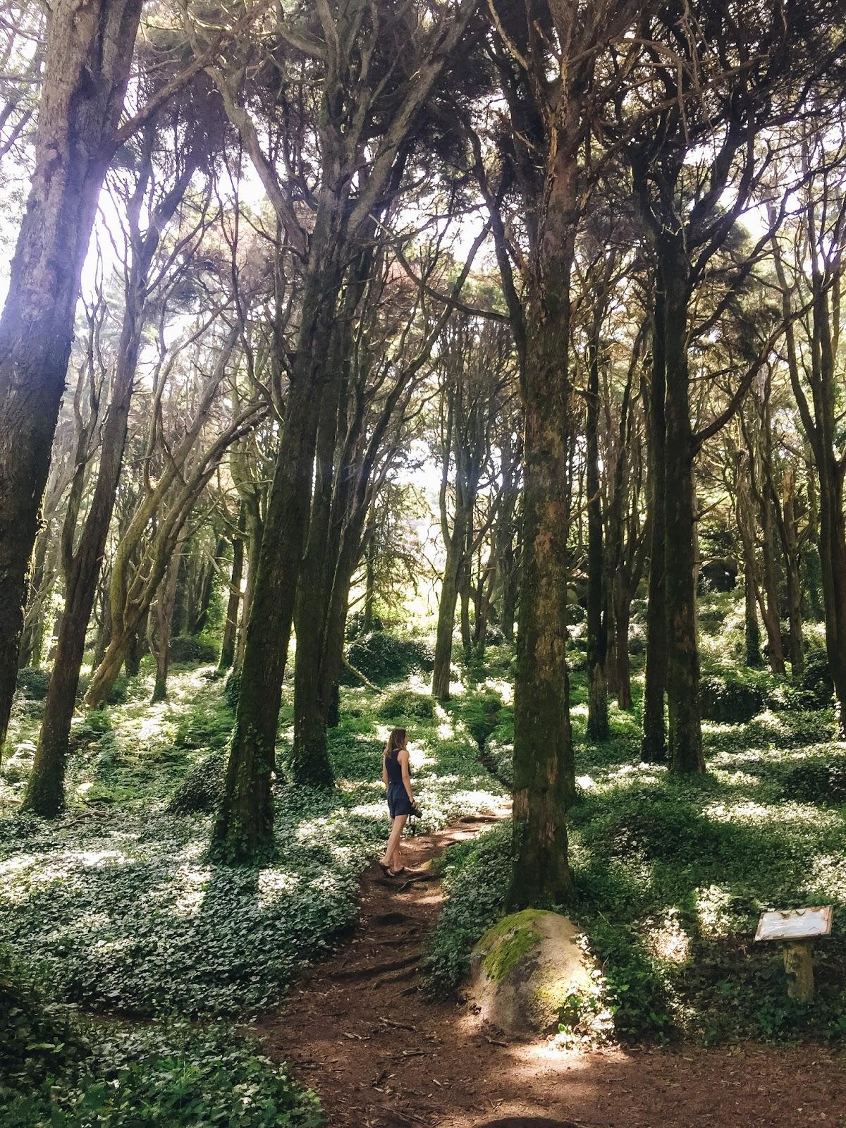 Imposanter Sintra National Park
