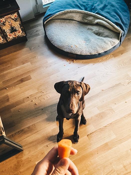 warum mein hund nicht mit trockenfutter gef ttert wird. Black Bedroom Furniture Sets. Home Design Ideas